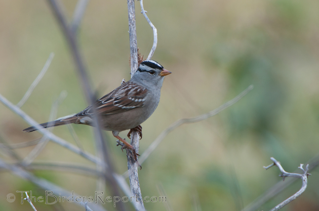 sparrow and finch species a good location to hang out and observe the