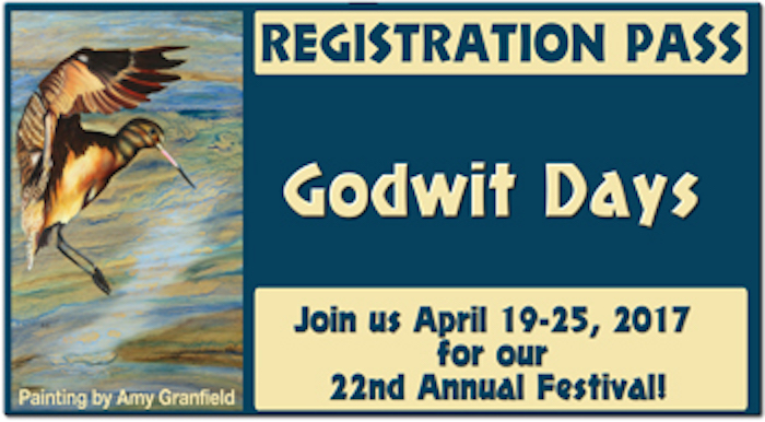 Godwit Days 2017